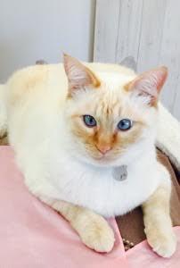 山口県山口市美容室/ネコカフェ/シューケット/猫/猫カフェ
